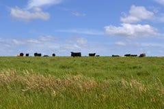 Ομάδα αγελάδων Στοκ φωτογραφία με δικαίωμα ελεύθερης χρήσης