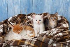 Ομάδα γατακιών στο κάλυμμα καρό Στοκ εικόνες με δικαίωμα ελεύθερης χρήσης