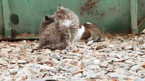 Ομάδα γατών αλεών που κάθονται κοντά στα απορρίμματα dumpster και που κοιτάζουν περίπου Εστίαση στο αμμοχάλικο του forefround, θο απόθεμα βίντεο