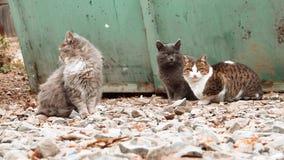 Ομάδα γατών αλεών που κάθονται κοντά στα απορρίμματα dumpster και που κοιτάζουν περίπου φιλμ μικρού μήκους