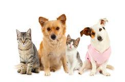 Ομάδα γατών και σκυλιών στοκ φωτογραφία