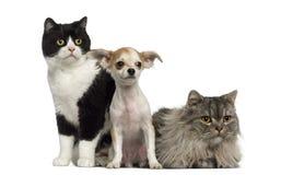 Ομάδα γατών και συνεδρίασης και να βρεθεί σκυλιών στοκ φωτογραφίες