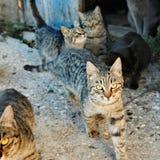 Ομάδα γατών στοκ φωτογραφίες