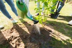 Ομάδα εθελοντών που φυτεύουν το δέντρο στο πάρκο στοκ εικόνες