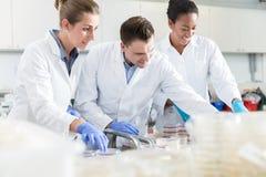 Ομάδα επιστημόνων στο εργαστήριο τροφίμων με τα δείγματα petri DIS Στοκ εικόνα με δικαίωμα ελεύθερης χρήσης