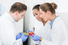 Ομάδα εργαστηριακών ερευνητών τροφίμων που συγκρίνουν τους πολιτισμούς βακτηριδίων Στοκ φωτογραφία με δικαίωμα ελεύθερης χρήσης
