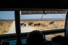 Ομάδα ελεφάντων στο εθνικό πάρκο Ναμίμπια Etoshna Στοκ εικόνα με δικαίωμα ελεύθερης χρήσης