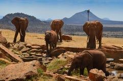 Ομάδα ελεφάντων στοκ φωτογραφίες με δικαίωμα ελεύθερης χρήσης