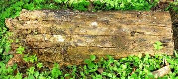 ομάδα δεδομένων ξύλινη Στοκ Εικόνες