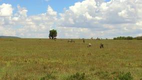 Ομάδα ζώων χορτοφάγων στη σαβάνα στην Αφρική απόθεμα βίντεο