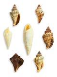 Ομάδα θαλασσινών κοχυλιών Στοκ Εικόνες