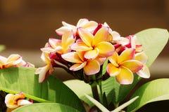 Ομάδα κίτρινων άσπρων και ρόδινων λουλουδιών Στοκ εικόνα με δικαίωμα ελεύθερης χρήσης
