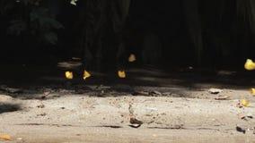 Ομάδα κίτρινων πεταλούδων φιλμ μικρού μήκους