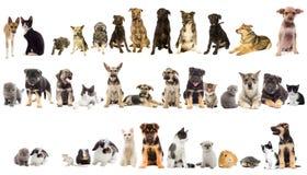 Ομάδα κατοικίδιων ζώων Στοκ Φωτογραφία