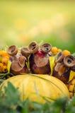 Ομάδα κουκουβαγιών κάστανων Στοκ Εικόνες