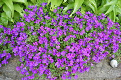 Ομάδα λουλουδιών Στοκ εικόνα με δικαίωμα ελεύθερης χρήσης