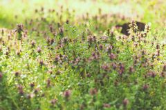 ομάδα πεδίων 01 08 2011 μεγάλη που γίνεται τα φυτά ολλανδικών εικόνων το μικρό zelhem Στοκ εικόνες με δικαίωμα ελεύθερης χρήσης