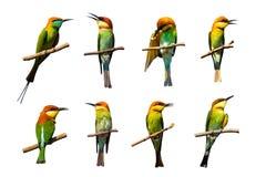 Ομάδα πουλιών στους κλάδους στο άσπρο υπόβαθρο ελεύθερη απεικόνιση δικαιώματος