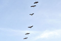 Ομάδα πουλιών στο μπλε ουρανό Στοκ Φωτογραφία