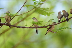 Ομάδα πουλιών στοκ φωτογραφία