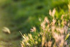 Ομάδα πράσινων ζιζανίων στοκ φωτογραφίες με δικαίωμα ελεύθερης χρήσης