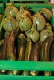 Ομάδα πράσινων κολοκυθιών μέσα στο ξύλινο κιβώτιο, κολοκύθι Στοκ Φωτογραφίες