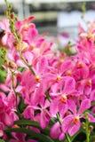 Ομάδα ρόδινων λουλουδιών ορχιδεών Στοκ φωτογραφία με δικαίωμα ελεύθερης χρήσης