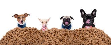 Ομάδα σκυλιών πίσω από τα τρόφιμα αναχωμάτων Στοκ φωτογραφίες με δικαίωμα ελεύθερης χρήσης