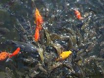 Ομάδα του νερού με τα ψάρια Στοκ φωτογραφία με δικαίωμα ελεύθερης χρήσης