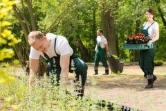 Ομάδα των κηπουρών που φυτεύουν τα λουλούδια Στοκ Εικόνα