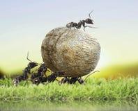 Ομάδα των μυρμηγκιών Στοκ εικόνα με δικαίωμα ελεύθερης χρήσης