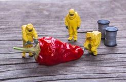 Ομάδα των πυροσβεστών που επιθεωρούν τα κόκκινα πιπέρια τσίλι στοκ φωτογραφία