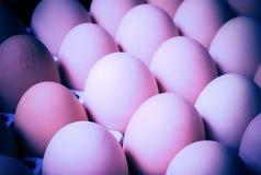 Ομάδα φρέσκων αυγών στο δίσκο εγγράφου Στοκ Εικόνες