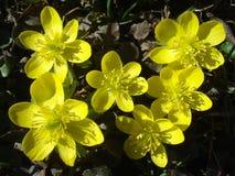 Ομάδα χειμώνας τοπ άποψη λουλουδιών ακόνιτο του †« Στοκ Φωτογραφίες