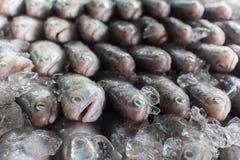 Ομάδα ψαριών έτοιμων στο χονδρικό εμπόριο στην αγορά ψαριών της Ταϊλάνδης Στοκ Φωτογραφία