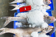 Ομάδα ψαριών έτοιμων στο χονδρικό εμπόριο στην αγορά ψαριών της Ταϊλάνδης Στοκ Εικόνες