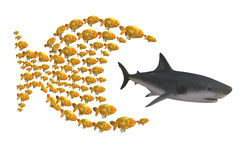 Ομάδα ψαριών που κυνηγά τον καρχαρία Στοκ Εικόνα
