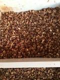Ομάδα betel - καρύδια Στοκ φωτογραφία με δικαίωμα ελεύθερης χρήσης