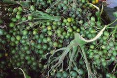 Ομάδα betel - καρύδι ή areca καρύδι στην αγορά Στοκ εικόνες με δικαίωμα ελεύθερης χρήσης