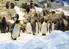 Ομάδα penguins στον πάγο, βράχοι πίσω Στοκ Εικόνες