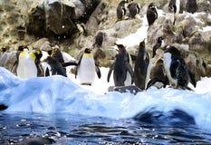 Ομάδα penguins στον πάγο, βράχοι πίσω Στοκ φωτογραφία με δικαίωμα ελεύθερης χρήσης
