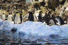 Ομάδα penguins στον πάγο, βράχοι πίσω Στοκ Φωτογραφία