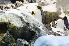 Ομάδα penguins στον πάγο, βράχοι πίσω Στοκ εικόνες με δικαίωμα ελεύθερης χρήσης
