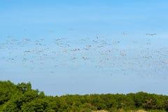 Ομάδα seagull Στοκ εικόνα με δικαίωμα ελεύθερης χρήσης