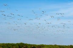Ομάδα seagull Στοκ Εικόνα