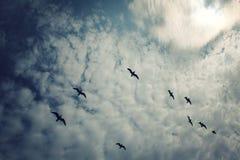 Ομάδα seagulls επάνω από τη λίμνη Ladoga ηλικίας φωτογραφία Στοκ Εικόνες