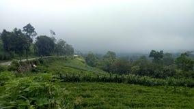 Ομίχλες στην κορυφή υψώματος στοκ εικόνα με δικαίωμα ελεύθερης χρήσης