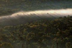 Ομίχλη ανατολής στην αγριότητα Στοκ φωτογραφία με δικαίωμα ελεύθερης χρήσης