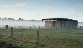 Ομίχλη αυλών στοκ εικόνες