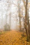 Ομίχλη και υδρονέφωση στο δάσος, με το ζωηρόχρωμο φύλλωμα φθινοπώρου Στοκ φωτογραφία με δικαίωμα ελεύθερης χρήσης